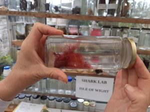 red seaweed in a jar, in the Shark Lab Isle of Wight